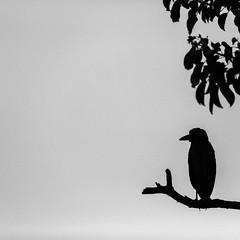 Night Watchman (Mabry Campbell) Tags: 2014 fourseasons houstonphotographer mabrycampbell march mexico nayarit puntamita rivieranayarit bird branch fineartphotographer fineartphotography image nighttime photo photograph photography silhouette tree tropics f28 march12014 20140301h6a9860 200mm ¹⁄₂₀₀₀sec 100 ef200mmf28liiusm