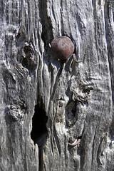 ESPONELLÀ - TEXTURES D'UNA PORTA VELLA (Joan Biarnés) Tags: esponellà pladelestany girona catalunya porta puerta textures 224 panasonicfz1000