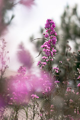 .:: On My Way ::. (omjinphotography) Tags: flowers purple violet light nature plants blooming flora jawatengah hills bukit umbulsidomukti semarang travel vacation holiday 50mmlens rebelt3 wisata closeup garden botany