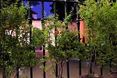 TRAS LA REJA (ameliapardo) Tags: reja ventana plantas granadas alcazardesevilla sevilla andaucia españa fujixt1
