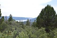 DSC_0300 (Six Sigma Man (2.700.000 views)) Tags: bigbear california bigbearlake cougarcresttrail nikon nikond3200