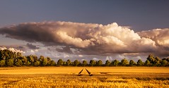 The cloud (marielledevalk) Tags: field sky landscape cloud country yellow trees holland dutch