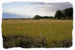 Barling Magna Nature reserve (Brian Legg) Tags: barlingmagna nature wpg oldleggey photoshop arty