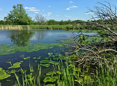 Local Wetlands (cowyeow) Tags: missouri american america usa nature green habitat landscape forest trees lake water wetland wetlands composition travel rural
