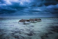 Cayo Guillermo - Cuba (TONYCO33) Tags: cuba cayoguillermo playa caribe