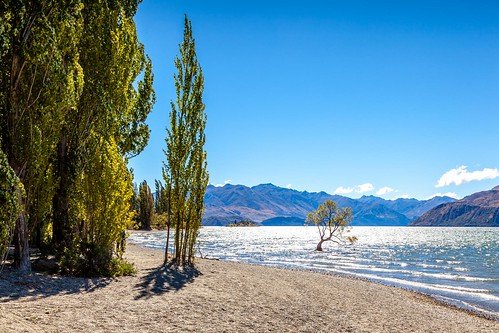 That Wanaka Tree-2