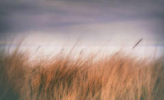 Bruised (MontanaRoots (aka Craig)) Tags: beach grass nature bruised washington canon 5d markiv water ocean outdoors subtle park sound northwest sky storm clouds stormy