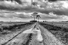 Wet wet wet (Pieter ( PPoot )) Tags: wet bw sandpath trees reflection