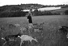 A way of life (Alexandre Dulaunoy) Tags: goat freedom nature chevre liberte sooc noiretblanc noirblanc animal blackwhite bw prairie goats agriculteur farmer farm