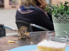 Danke für euren Besuch! Ich teile gern. (ingrid eulenfan) Tags: leipzig stadt city zentrum cafe kaffeepause kaffee kuchen café cappuccino cake spatz sparrow bird vogel bonappétit