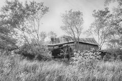 Summer in the Country (gabi-h) Tags: barn fallingdown dilapidated derelict gabih monochrome blackandwhite grass trees summer princeedwardcounty decay