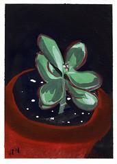 Baby Jade (hr_mick) Tags: jade cacti houseplant watercolor paint painting succulent clay planter indoor garden gaouche orange green black