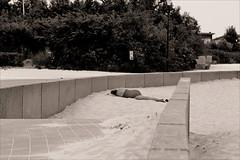 in between (Gabi Wi) Tags: sunbath woman sleeping beach sand between alone summer summertime tiredfromreading beachaccess monochrome