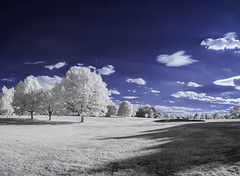 Beckenham Place Park (blackwoodse6) Tags: london bromley nikon ir park white foilage blue clouds trees beckenhamplacepark panorama lightroom6 woodeffect londonparks southlondon southeastlondon nikond300 falsecolour infrared infraredphotography lewisham
