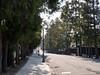 Zenrin-gai - Cedar street - 1 (gemapozo) Tags: aomori zenringai ceder 645z pentax hirosakicity japan street 弘前市 青森県 日本 hdpentaxdfa645macro90mmf28edawsr 禅林街 杉並木 cedar