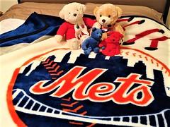 LET'S GO MET'S OUTTA THAT SLUMP (Visual Images1) Tags: htbt happyteddybeartuesday teddybears blanket mets letsgomets