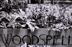 Woodspell (35mm) (jcbkk1956) Tags: bangkok thailand ekkamai sign plants mono blackwhite street contax 167mt film 35mm carlzeiss 45mmf28 ilford pan100 analog worldtrekker