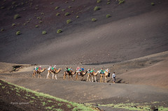 Caravan (pietkagab (on the road)) Tags: camel caravan ride tourists tourist attraction timanfaya canaries canaryislands canary volcanic landscape light spanish pietkagab photography pentax piotrgaborek pentaxk5ii travel trip tourism adventure