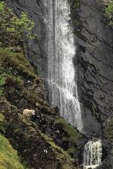 Dobb's Linn waterfall (OutdoorMonkey) Tags: scotland southernuplands countryside rural animal sheep dobbslinn crag ledge rockface steep water waterfall cliff
