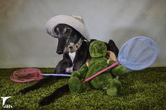 Thanks Dad (houndstooth4) Tags: dog greyhound flattery dogchal ddc odc 2452 52weeksfordogs