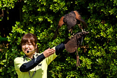 Female Harris Hawk, Akari and Bird Master Girl : ハリスホークの朱里とバードショーのお姉さん (Dakiny) Tags: 2017 summer june japan kanagawa yokohama asahiward park city street outdoor zoo yokohamazoologicalgardens zoorasia show birdshow people portrait woman girl creature animal bird raptor harrishawk bokeh nikon d750 sigma apo 70200mm f28 ex hsm apo70200mmf28dexhsm sigmaapo70200mmf28dexhsm nikonclubit