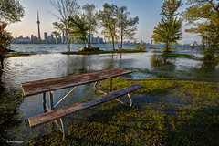 Toronto Island flooding (Phil Marion) Tags: philmarion travel beautiful cosplay candid beach woman girl boy teen 裸 schlampe 懒妇 나체상 फूहड़ 벌거 벗은 desnudo chubby fat nackt nu निर्वस्त्र 裸体 ヌード नग्न nudo ਨੰਗੀ голый khỏa جنسي 性感的 malibog セクシー 婚禮 hijab nijab burqa telanjang обнаженный عري nubile برهنه hot phat nude slim plump tranny cleavage sex slut nipples ass xxx boobs dick tits upskirt naked sexy bondage fuck piercing tattoo dominatrix fetish torontoislandflood