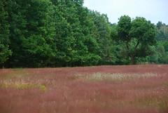 DSC_8334 copy (FMAG) Tags: kpn tree trees meadow forest