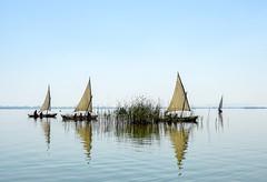 Four sailboats (alcahazada) Tags: latinsailing velalatina navegación albufera lagoon boats barcas valencia agua water outdoor landscape paisaje airelibre