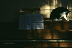 Morning Light (ElenaK@Chicago) Tags: morninglight piano spike