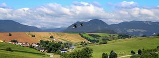 Storks on the move over Liptovský region in Slovakia