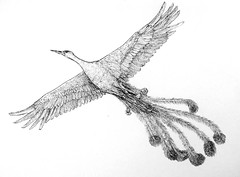 The Bird (Marcos Telias) Tags: illustration drawing dibujo ilustración sketch boceto bosquejo arte artista artist ballpoint bolígrafo pen lápiz fantasy