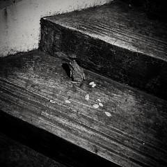 Goodbye love (Rad.iant/Blan_k) Tags: monochrome nature singapore frog voices mountfaber nighthike
