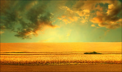 Silent hill (Katarina 2353) Tags: landscape sunset summer fields sky silent hill katarinastefanovic katarina2353 serbiainspired golden