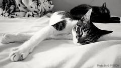Alice and Oncinha... (PY6RDM) Tags: cats cat blackwhite black white bw pretoebranco preto branco moto motog4plus motorola