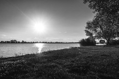 Over the lake (Ákos Fekete) Tags: landscape lake photography blackwhite bw monochrome nocolors sun afternoon evening water trees june summer 2017 shine shining sony sonyalpha6000 alpha a6000 ilce6000 ilce emount mirrorless milc csc evil europe adács hungary magyarország monochromelandscape bwlandscape beautiful beautifulcapture mbpictures