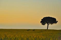 sol (Jordi sureda) Tags: sol un minimal arbre nature paisatge tree light landscape naturaleza minimalismo simple photography