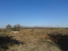 Зверушки 0132 (2014.10.27) (vladsky78) Tags: ильичёвск небо птицы зелень поле