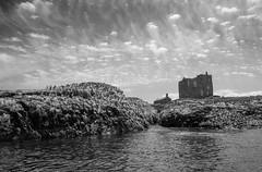 Farne Islands (V Photography and Art) Tags: birds guillemot abbey rocks cliffs sky clouds sea seascape farneislands northumberland englnd wide fujixt1 14mm colony wildlife