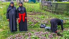 AGE_0219 (RaspberryJefe) Tags: burma canada2017 canadians kitchenerwaterloo muslims rohingas