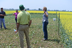 bayer-showcase-nd-17-143 (AgWired) Tags: bayer cropscience showcase plot tour 2017 soybeans canola wheat cereals corn north dakota agwired zimmcomm new media chuck zimmerman