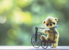 button does not like tricycles (rockinmonique) Tags: button teddybear teddy tiny tricycle toy bokeh green yellow red chrissbackyard juneflickrgalsmeetup moniquew canon canont6s tamron copyright2017moniquew