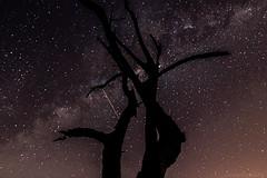 _Y8A5729-_sRGB (picturesartbr) Tags: sãopaulo brazil br longexposure longaexposicao saopedro milyway vialactea estrelas stars