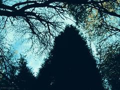 Paradise is forever (Inés Luque Aravena) Tags: tree albero árbol rama ramo branch nature natura naturaleza cielo sky blue bleu azul celeste valdivia chile sur jardin giardino garden botánico botanic austral
