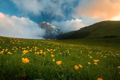 A Sea of Flowers (luigig75) Tags: flowers mountai mountain montagne gransasso parconazionaledelgransassoemontidellalaga abruzzo pratiditivo clouds sunset tramonto nuvole sky appennini appennino centrale italia italy abruzzi canonefs1022mmf3545usm 70d