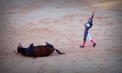 sin puntilla (aficion2012) Tags: istres francia france corrida bullfight bull toro toros taureau fundi elfundi juan pedro domecq tauromachie tauromaquia matador torero toreo