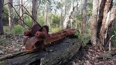 Millipede sculpture (ajft) Tags: sculpture treadsculptures aus australia bendofislands geo:lat=3770583333 geo:lon=14527472222 geo:zip=3097 geotagged millipede mingalaba victoria