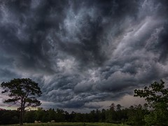 tree and storm clouds - explored 07/08/17 (Howell Weathers) Tags: alabama clouds nature outdoor storm tree sky landscape hdr
