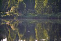 june river (johanskold) Tags: nikon swedishlapland alaskanmalamute grimm arcticcircle dog nature