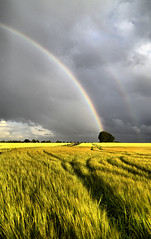 rainbow (Neal J.Wilson) Tags: rain summer rainclouds rainbow wheat corn weather fields farming tree natural nature landscape skies clouds stormclouds green denmark danishlandscapes light