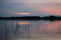 The Plants (modestmoze) Tags: lake water plants 2017 500px summer june travel explore clouds dusk sky trees reflection lithuania outside outdoors lines black silhouette green colorful pink blue white grey beautiful sunset nature landscape naturephotograph